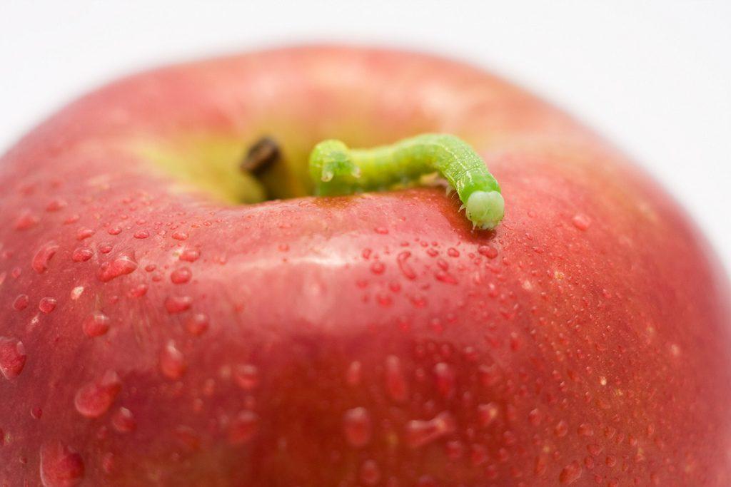 Fillon : le ver dans une pomme déjà pourrie